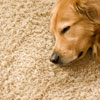 shreveport-carpet-cleaning